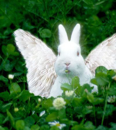 Angel bunny