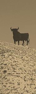 An Osborne\'s Bull
